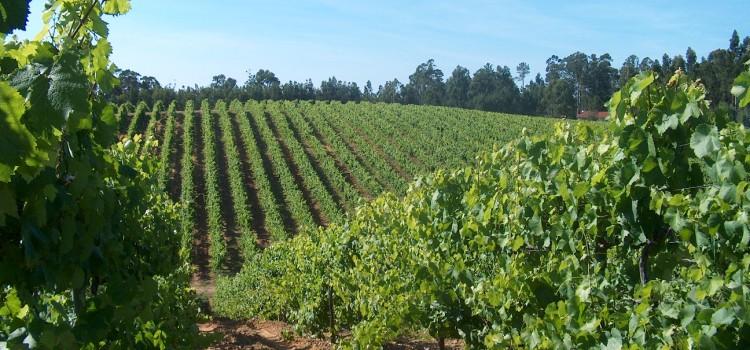 The Demarcated Region of Vinho Verde, in Douro Valley